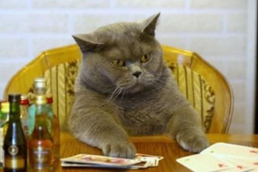 Cat Gambling