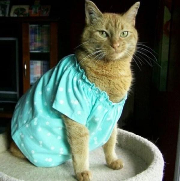 Cat In Blue Girls Pajamas