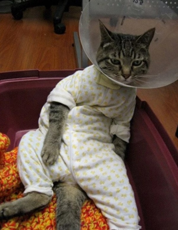 Cat In Yellow Spotted Pajamas