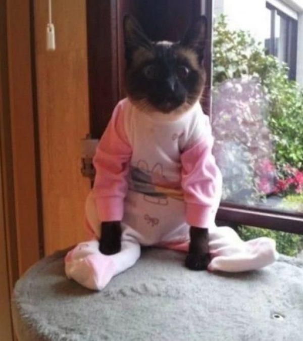Cat In Pink Baby Grow Pajamas