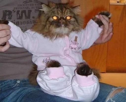 Cat In Pink Pajamas