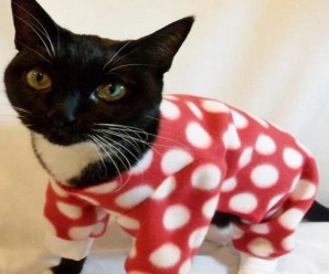 Top 10 Funny Images of Cats In Pyjamas