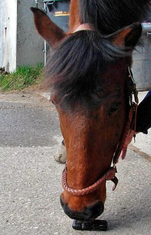 Horse using a phone