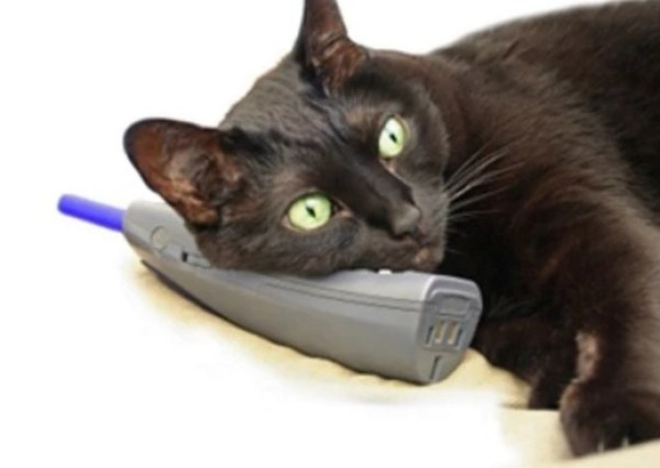 Cat using a phone
