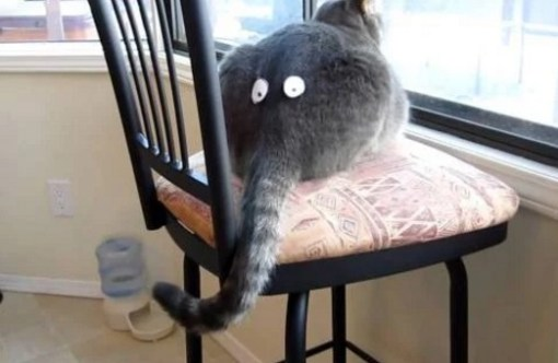 Cat With Funny Eyes stuck on His Rear