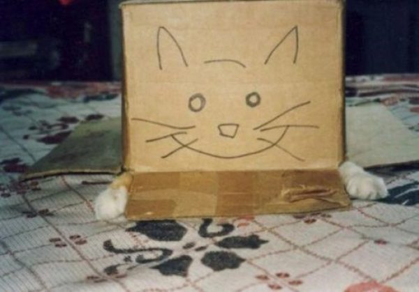 Cat With Funny Eyes on a Box