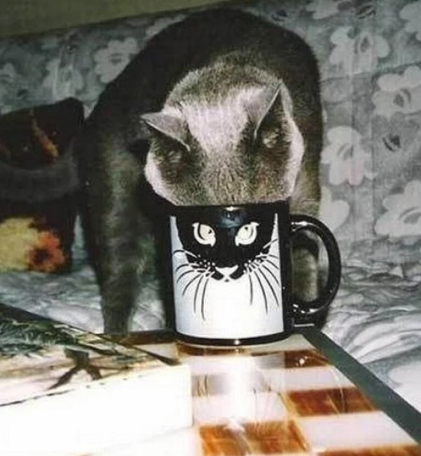 Cat With Funny Eyes on a Mug