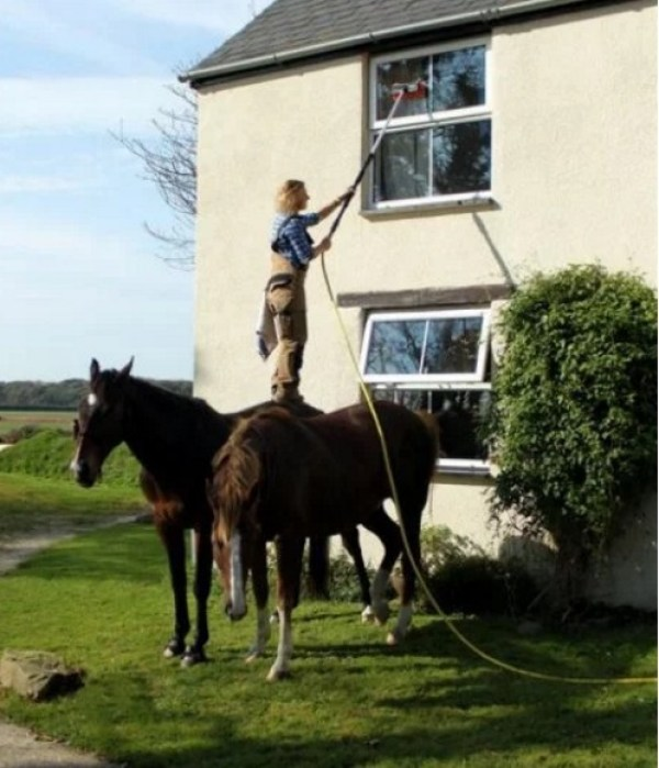 Who needs ladders when you have Horses