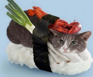 Ten Fishy Cats Dressed as Sushi That You Won't Want to Eat