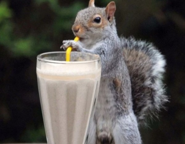 Squirrel using a drinking straw