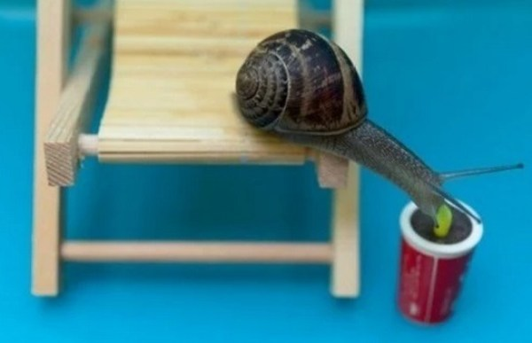 Snail using a drinking straw