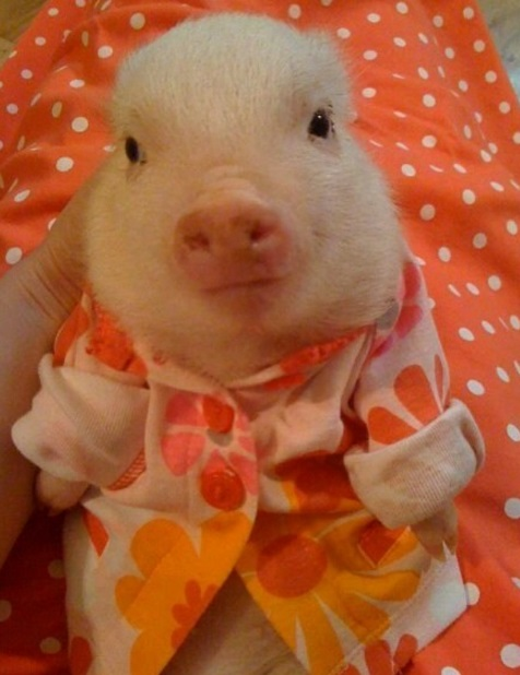 Pig in Pajamas