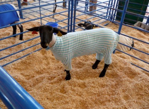 Sheep in Pajamas