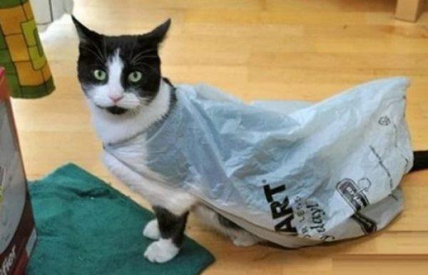 Cat Avoiding the Rain