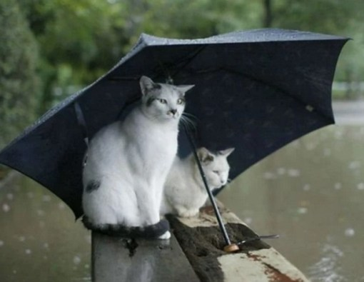 Cat Avoiding the Rain