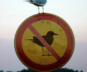 Ten Animals Disobeying Signs That Won't Be Told What to Do