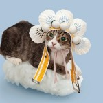 Top 10 Strange Images of Cats Dressed as Sushi