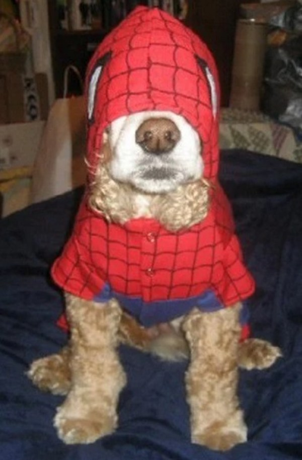 Dog Looks like Spider-Man