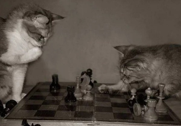 Cats Playing Chess