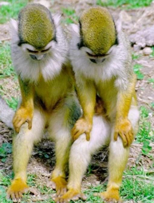 Identical Twin Monkeys
