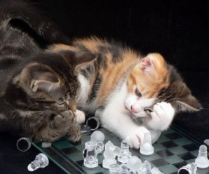 Top 10 Images of Cats Playing Chess