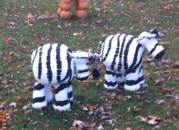 Pumpkin/Jack-o-lantern that looks like Zebras