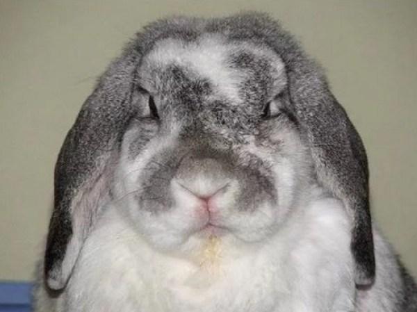 Grumpy Looking Rabbit