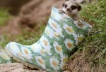 Top 10 Funny Animals Wearing wellies