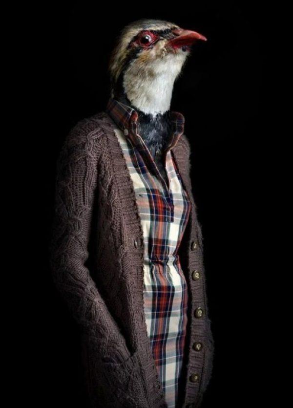Falcon Dressed in Latest Fashion