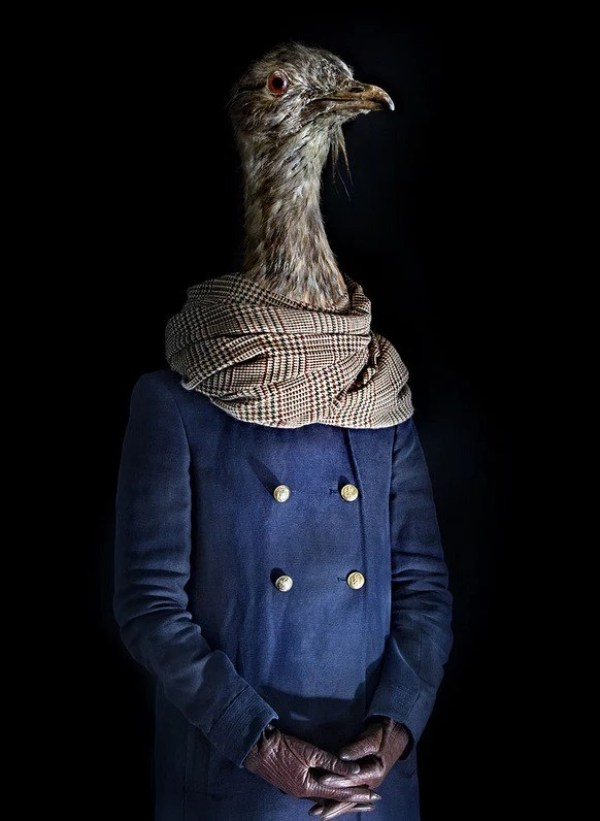 Pheasant Dressed in Latest Fashion