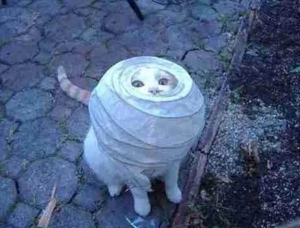 Cat stuck in a lamp shade