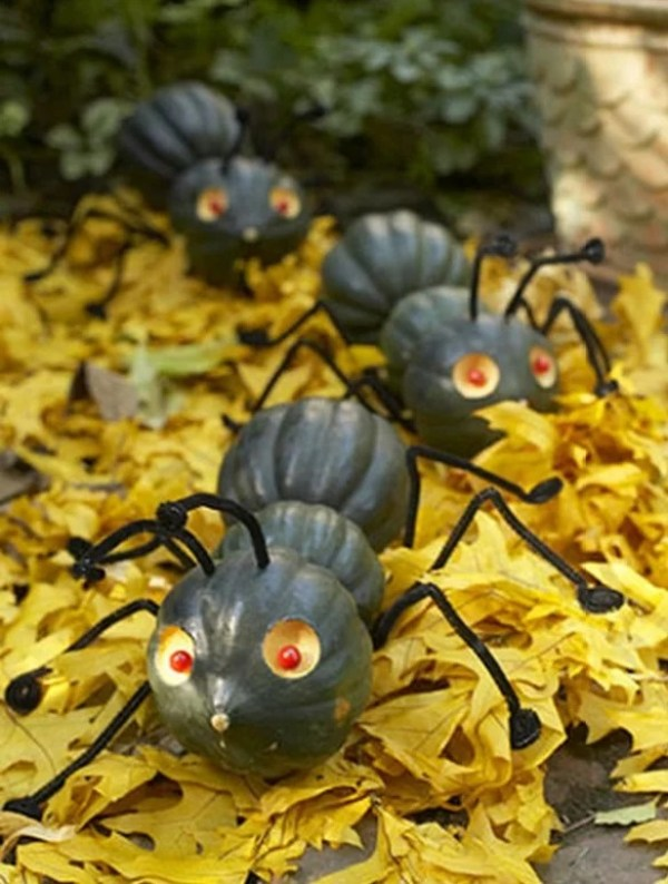 Things to do With Pumpkins After Halloween: Ant House