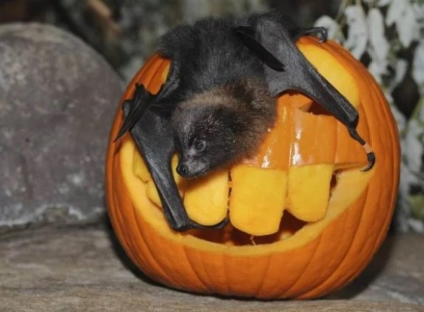 Things to do With Pumpkins After Halloween: Feed the animals