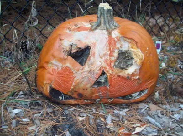 Things to do With Pumpkins After Halloween: Compost