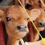 Top 10 Best Images of Grumpy Animals