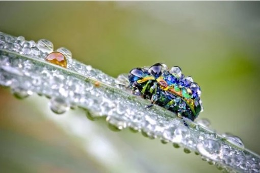 Insect Covered in dew