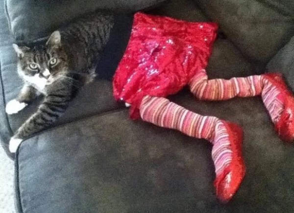 Cat in a pair of stuffed tights