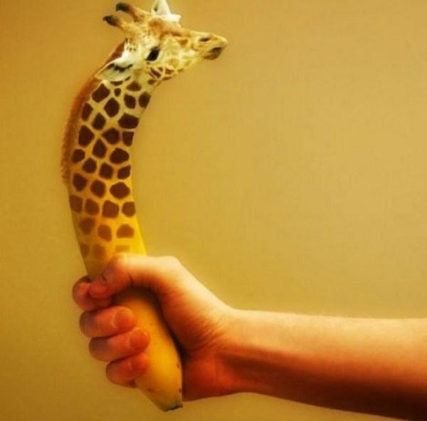 Photoshopped Banana Made to Look Like a Giraffe