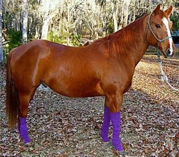 Horse wearing socks