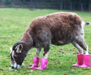 Top 10 Fashion Conscience Animals Wearing Shoes
