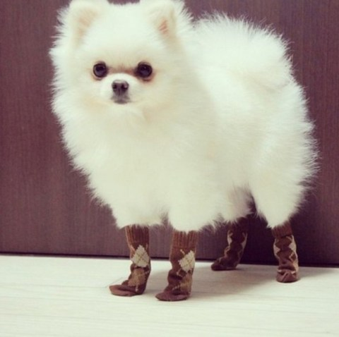 Top 10 Images of Animals Wearing Socks