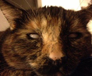 Top 10 Scary Images of Zombie Cats