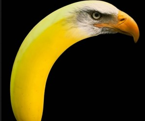 Top 10 Digital Art: Photoshopped Banana Animals