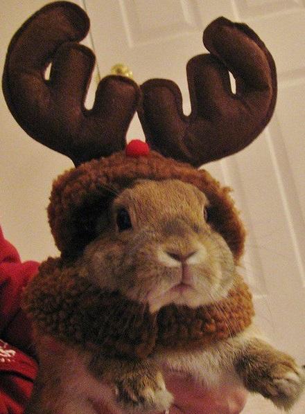Rabbit Dressed as a Reindeer