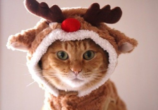 Cat Dressed as a Reindeer