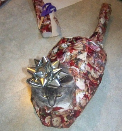 Gift Wrapped Cat