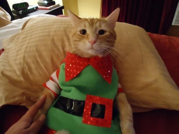 Cat in an Elf Costume & Ten Pictures of Cats in Elf Costumes That Will Make You Smile