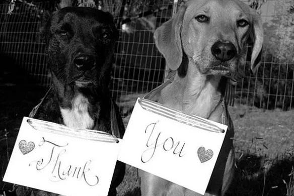 Dog Saying Thank you