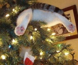 Top 10 Naughty Tree Climbing Christmas Cats