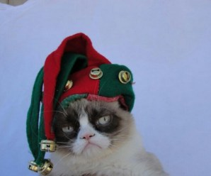 Ten Pictures of Cats in Elf Costumes That Will Make You Smile